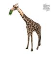 Giraffe polygon vector image vector image
