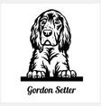 gordon setter - peeking dogs - breed face head vector image vector image