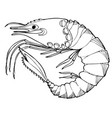 sea shrimp coloring book hand drawing coloring vector image vector image