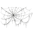 Torn spider web on white background vector image vector image