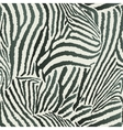 Animal Zebra Seamless Background vector image vector image