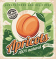 apricots vintage poster design vector image vector image