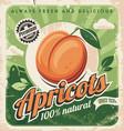 apricots vintage poster design vector image