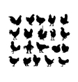 big collection cock and hen s black silhouettes vector image