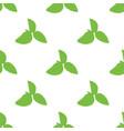 green basil ocimum tenuiflorum seamless pattern vector image