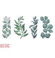 hand drawn card with eucalyptus succulent flowers vector image vector image