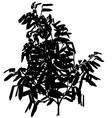 Exotic Tree Silhouette vector image