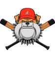 Ferocious Bulldog head vector image vector image
