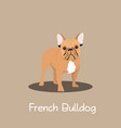 french bulldog pet cartoon standing design vector image