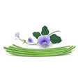 long beans fresh with flower leaves realistic vector image vector image