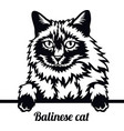 balinese cat - cat breed cat breed head isolated vector image vector image