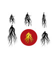 set ginseng icon and silhouette art vector image vector image
