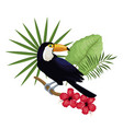 toucan hibiscus branch palm leaves vector image vector image