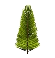 tree plant pine christmas vector image