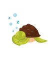 flat icon of cute sleeping turtle marine vector image