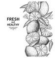 lemon border drawing citrus fruit engraved vector image vector image
