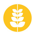 spike wheat isolated icon vector image vector image