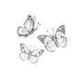 spring summer butterfly art for tattoo coloring vector image
