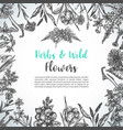 background with hand drawn herbs and wild flowers vector image