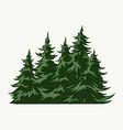 green fir trees vintage template vector image vector image