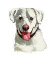 head a white labrador retriever dog vector image vector image