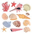 set sea shells isolated on a white background vector image