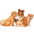 Different type of cute puppy dogs vector image vector image