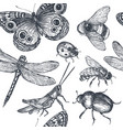 insects sketch decorative seamless pattern vector image vector image