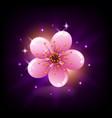 pink sakura flower icon on dark background vector image vector image