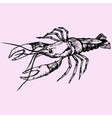 crayfish lobster vector image