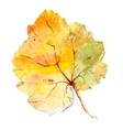 Watercolor leaf vector image vector image
