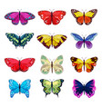 butterfly colorful insect flying for vector image