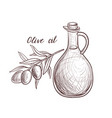 drawing olive oil vector image vector image