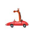 giraffe driving red car funny adorable animal