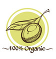 olive contour drawings for decoration of products vector image vector image