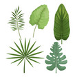 set leaves differents palm tropical vector image