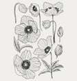 anemone flower drawing set isolated wild vector image vector image