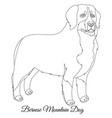 bernese mountain dog outline vector image vector image
