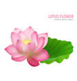 lotus flower realistic vector image