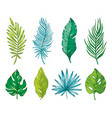 palm tropical leaf branch hand drawn watercolor vector image vector image