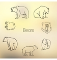 set different bears outline vector image vector image