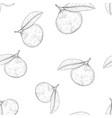 mandarin orange hand drawn black and white sketch vector image