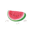 slice watermelon on white background summer vector image vector image