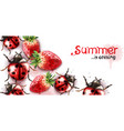 summer season with strawberry and ladybugs vector image