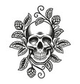 a beer skull vector image vector image