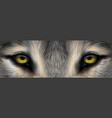 eyes a wolfi vector image vector image