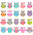 set colorful owls isolated on white vector image