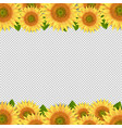 sunflowers border isolated transparent background vector image