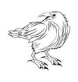 crow raven or corvus bird vector image