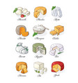 collection of cut sliced cheese assortment hand vector image